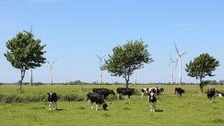 Die Nähe zwischen Windparks und Anwohnern ist in der Region Brake (Unterweser) fast unvermeidbar. BNK unterstützt die Akzeptanz von Windenergieanlagen.<br /> © Quantec Sensors GmbH